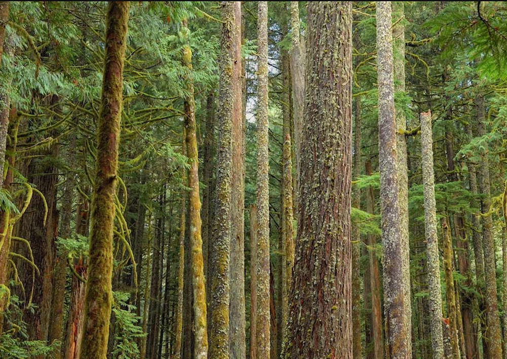 Western Redcedar and Western Hemlock forests